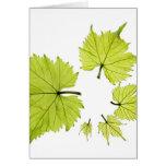 grape-leaves-11 felicitacion