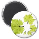 grape-leaves-11 iman