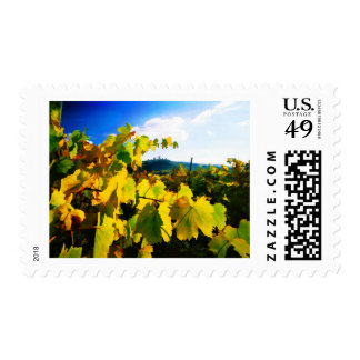 Grape Leaves and the Sky Postage