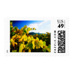 Grape Leaves and the Sky Postage Stamp