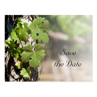 Grape Leaves Vineyard Wedding Save the Date Postcards