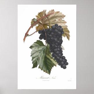 Grape,Muscat noir Poster