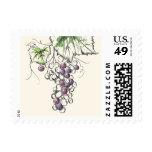Grape on Vine Postage Stamp