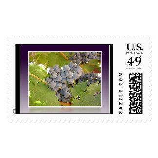 Grape Postage Stamps
