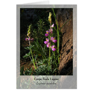 Grape Soda Lupine - Native Notecard Stationery Note Card