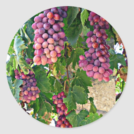 Grape Vine Craft Projects