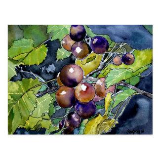 grape vine fruit still life art post card postcard