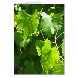 Grape Vine Greeting Card