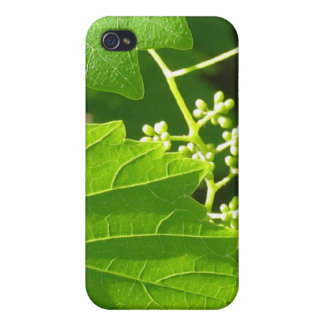 Grape Vine iPhone 4/4S Cases