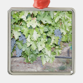 Grape vine nature and wine lover photograph metal ornament