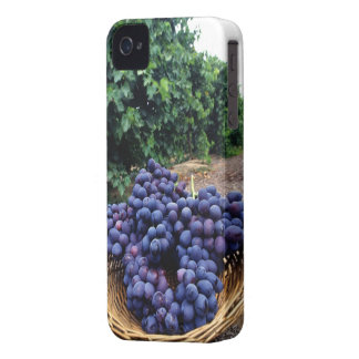 Grape Vineyard iPhone 4 Cover