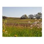 Grape Vineyard in Spring Postcard