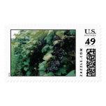Grape Vineyard Stamp