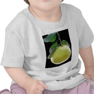 Grapefruit fruit tree photo by E.L.D. Shirt