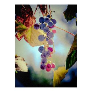 Grapes 6.5x8.75 Paper Invitation Card