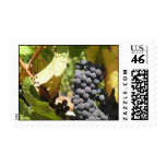 Grapes and Grapevine in Napa Valley Postage