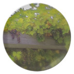 Grapes and Vines Melamine Plate