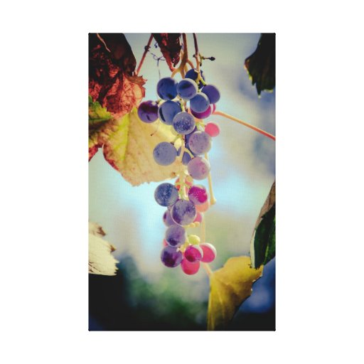 Grapes Stretched Canvas Print