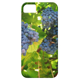 Grapes Cover For iPhone 5/5S