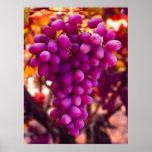 Grapes, Cesar Chavez Symbol Print