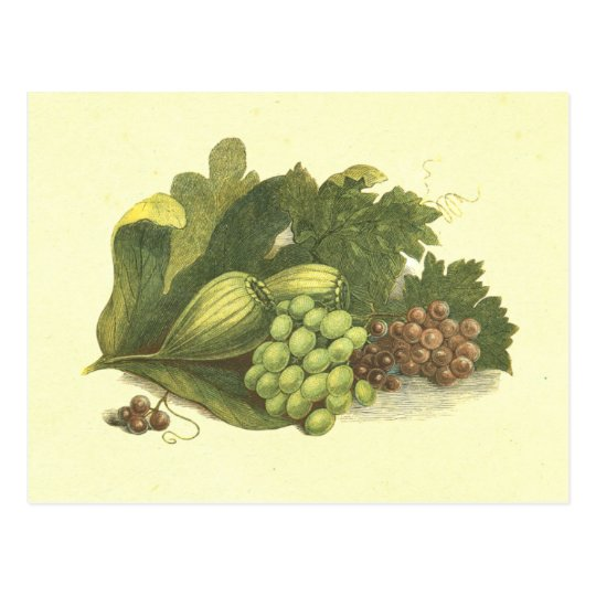 Grapes & Figs Vintage Lithograph Postcard