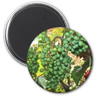 Grapes in a Vineyard Magnet