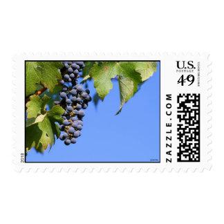 Grapes in Vineyard Postage