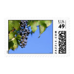 Grapes in Vineyard Postage Stamps