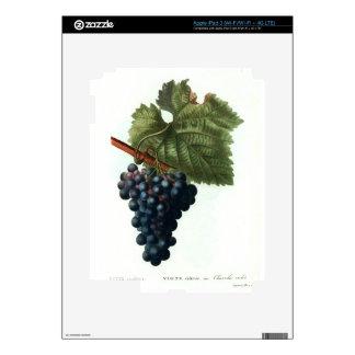Grapes iPad 3 Skins