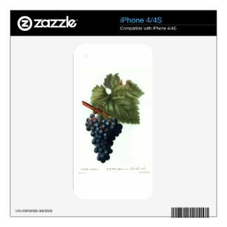 Grapes iPhone 4S Decals