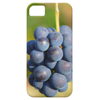 Grapes iPhone SE/5/5s Case