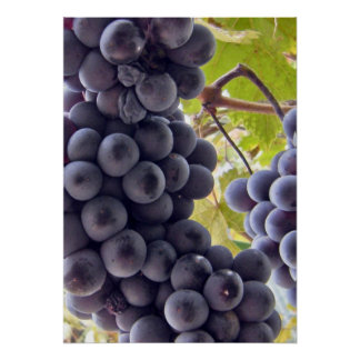 Grapes MF Posters