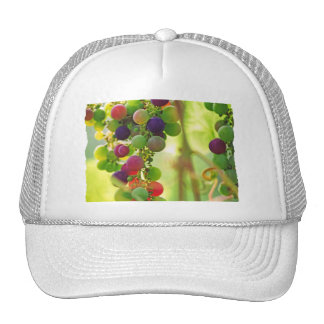 Grapes of Many Colors Hats