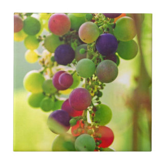 Grapes of Many Colors Tiles
