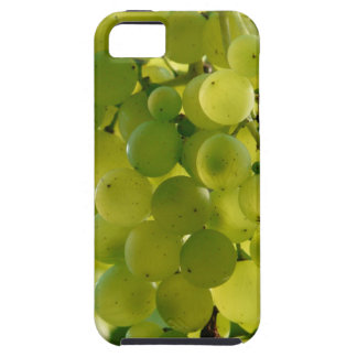 Grapes on a case