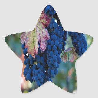 Grapes on a Vine Star Stickers