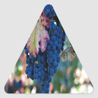 Grapes on a Vine Triangle Stickers