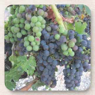 Grapes on the Vine, Aron Hill Vineyard Drink Coaster