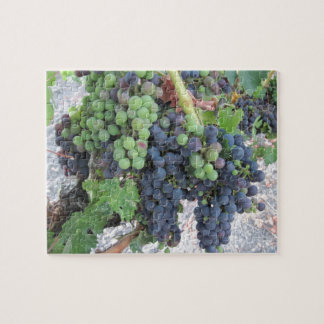 Grapes on the Vine, Aron Hill Vineyard Jigsaw Puzzles