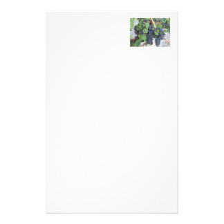 Grapes on the Vine, Aron Hill Vineyard Stationery Paper