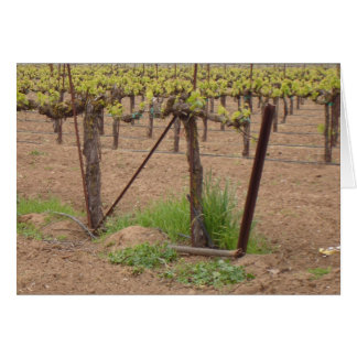 Grapes on the Vine Stationery Note Card