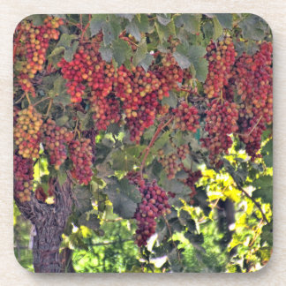 Grapes on the Vine Coasters