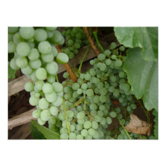 Grapes on the Vine Posters