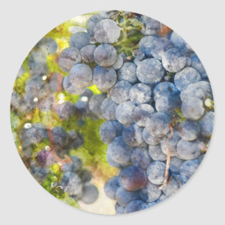 Grapes on the Vine ready to make Wine Classic Round Sticker