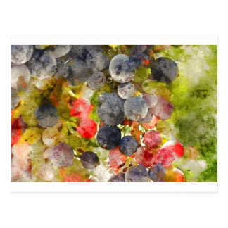 Grapes on the Vine ready to make Wine Postcard