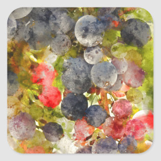 Grapes on the Vine ready to make Wine Square Sticker