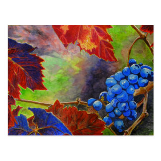 Grapes on Vine   Mini Collectible Prints Postcard