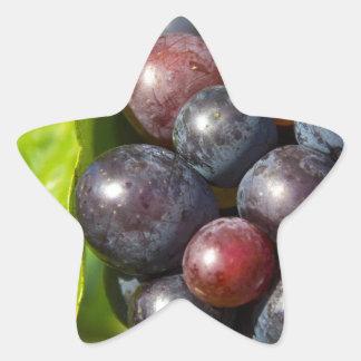 Grapes on vine star sticker