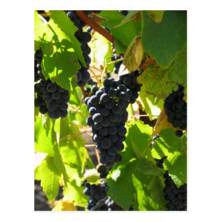 Grapes - Post Card