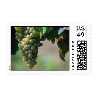 Grapes Postage Stamp